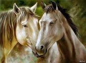 cavalo - oleo sobre tela