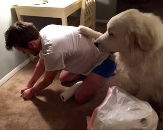 21 φοβεροί σκύλοι που δεν δίνουν ούτε ένα γαβ για τον προσωπικό σας χώρο.