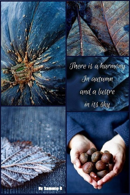 Autumn in Blue and Brown By Sammie R