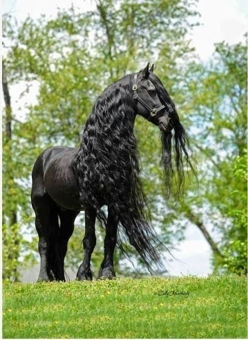 Beautiful Black Hors mother nature moments