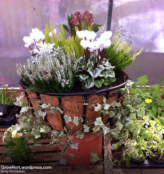 Hanging Flower Baskets For Winter : The world s catalogue of ideas