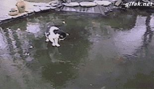 Cat having fun on a frozen pond #compartirvideos.es #funnyvideos