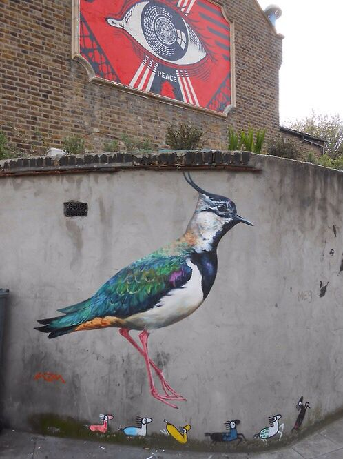 — LAPWING ON LANGHAM ROAD LONDON N15. MANY THANKS TO TURNPIKE ART GROUP- TAG. LAPWING WERE ONCE A VERY COMMON BIRD ON BRITISH FARMLAND, BUT THEY ARE NOW QUITE RARE, SUFFERING THE EFFECTS OF MODERN INTENSIVE AGRICULTURE, WHICH HAS NO PLACE FOR UNDISTURBED FIELDS OR FLOWER AND WATER MEADOWS. —