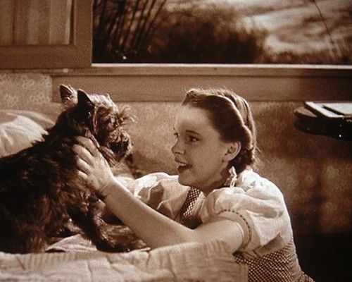 Seen this movie every 46 years of my life, and I still get upset when the witch threatens Toto:
