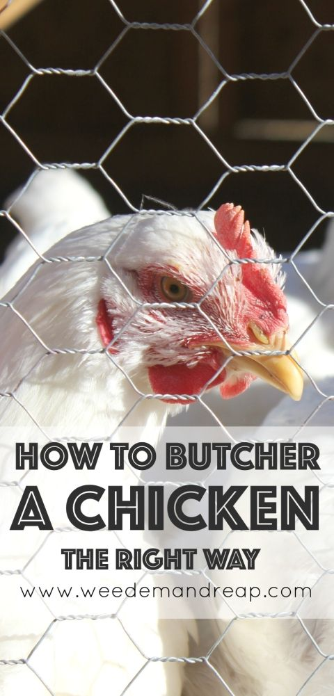How to Butcher a Chicken (The Right Way)