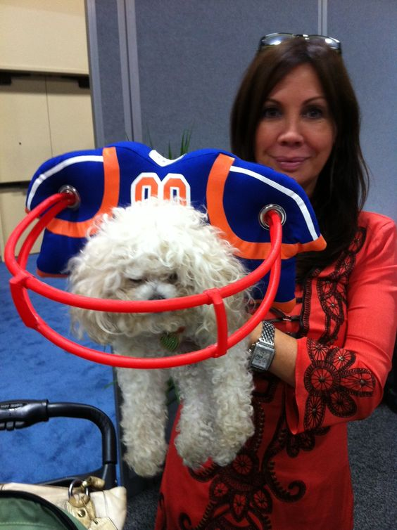 Muffin S Halo For Blind Dogs At Booth 5169 It S A Guide