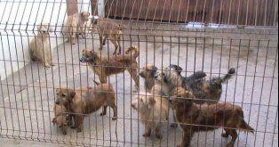 PETITION - Prohibit the sale of dogs and cats for food.Prohíban la Electrocución de Animales en Perreras!