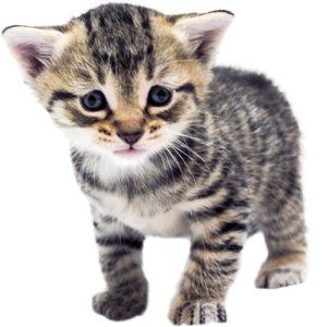 Kitten Progression: At-a-Glance - Alley Cat Allies ...