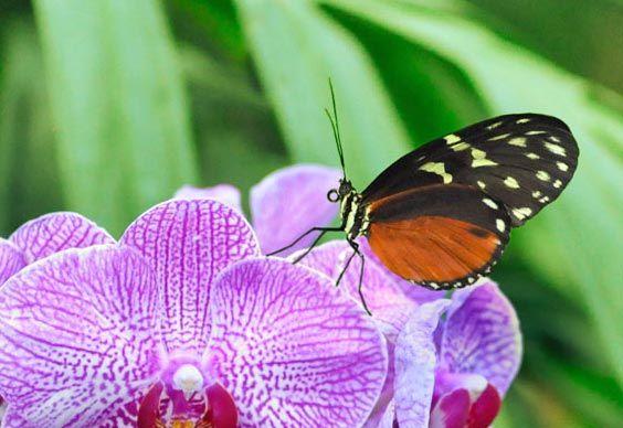 14c41e220010e77a39dc0f48cadccedd - Meijer Gardens Butterfly House Grand Rapids