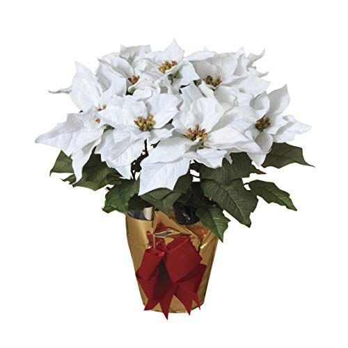 Tenwaterloo 21 Inch High Potted White Poinsettia Plant Artificial Christmas Poinsettia Plant In Gold Foil Wrap With Red Bow Poinsettia Plant Christmas Poinsettia