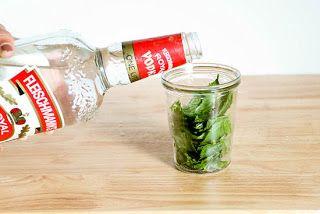 Cómo extraer aceite de las hojas de menta.