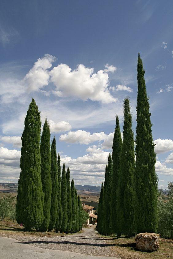 """Val d'Orcia, Tuscany, Italy - """"Creepy Italian trees... It's like they know..."""":"""