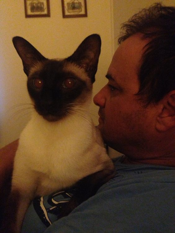 Siamese cats are extremely loving - but sometimes on their terms only!