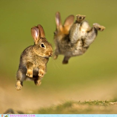 Now these are some high-hopping hoppers.