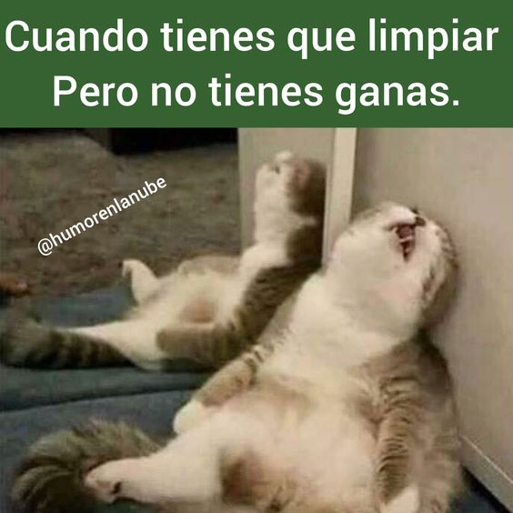 Visitanos para descargar o subir tus memes !!  #memes #momos #imagenesgraciosas