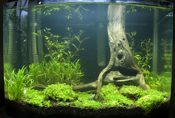 I would love to make a tank like this. The wood looks like the base of a real tree!