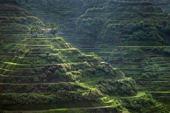 50 Patrimonios de la Humanidad, rice terraces of the philippines cordilleras