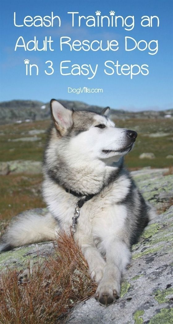 Ideas To Help You Train Your Dog In 2020 With Images Dog Training Rescue Dogs Training Your Dog