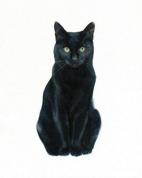 水粉插画-猫[一组猫的水彩画,真心好看,...