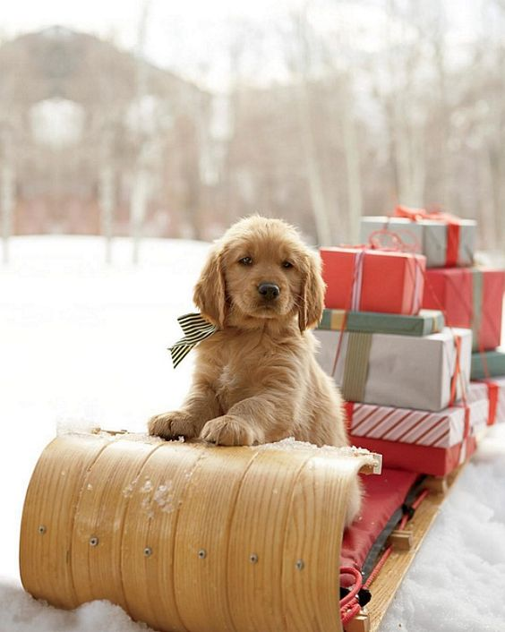 Welcome the first day of Winter! I love snow days sitting by the fire, drinking hot chocolate and getting cozy on the couch. Here is some Winter inspiration