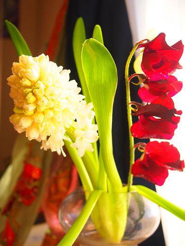 hyacinth and sweet pea