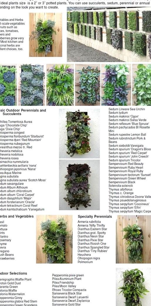 Vertical Garden And Plant Selection In 2020 Vertical Garden Plants Vertical Garden Plants
