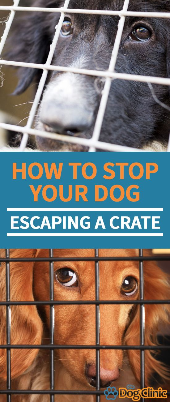 Dog Escaping Crate This Is A Difficult Problem To Deal With Here Are Some Tips For Strengthening A Crate And Making It A Mo Puppy Training Dog Training Dogs
