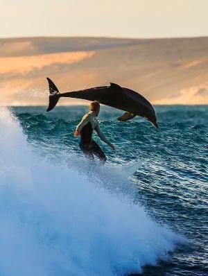 サーフィンとイルカ