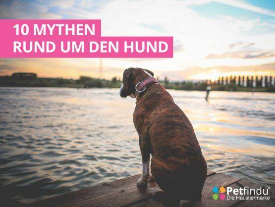 10-Mythen-der-Hundehaltung