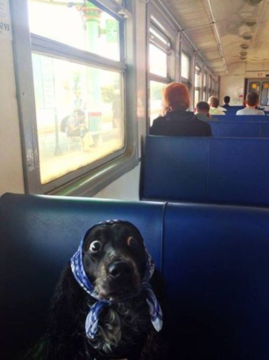 "This dog. | 31 Animal Pictures That Will Make You Say ""WTF"""