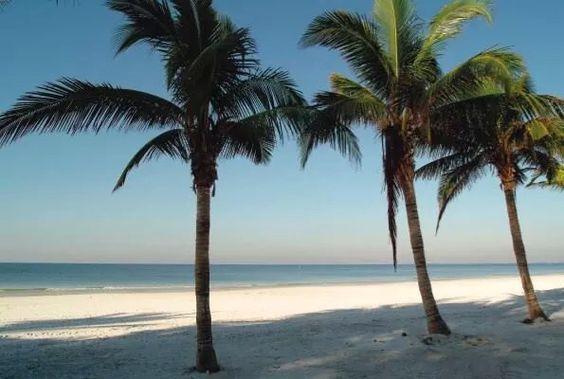 Beach & Palm trees