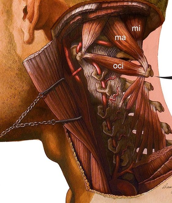 Clinical Anatomy/Anatomical Publications on Behance