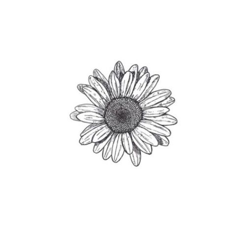 Imagine Flowers Black And White And Tumblr Small Daisy Tattoo