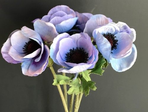 Light Purple Anemone Represents Expectations Anemone Flower Sleeve Flowers