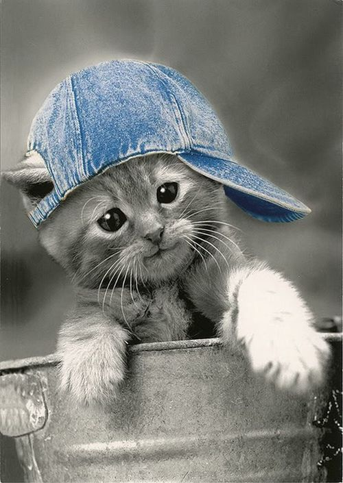 Kitten wearing denim hat.