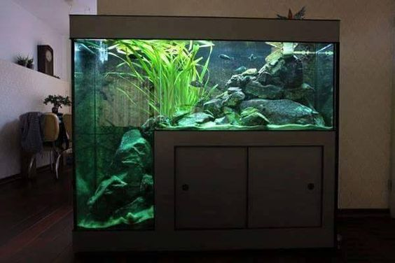 Custom drop off tank, nice size, would love to do some nice rock work in there and then make it an African cichlid tank