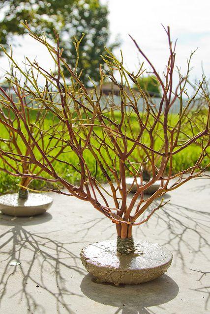 mini manzanita trees by mlehess, via Flickr