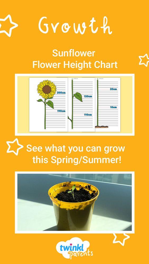 Sunflower Flower Height Chart Flower Chart Chart Sunflower Flower