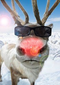 Rudolph in shades #Animals in #Glasses