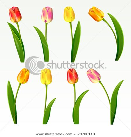 Picture of Eight Tulip Drawings Showing Tulips in Various Colors and Configurations in a Vector Clip Art Illustration