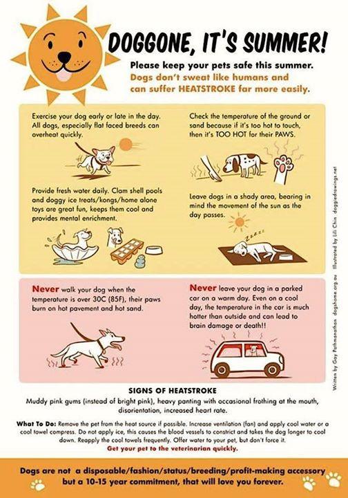 Summer Dog Safety Pet Health Pet Hacks Dog Safety