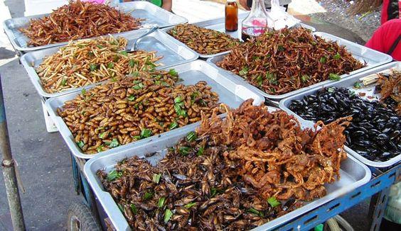 Một sạp hàng với nhiều loại côn trùng được bày bán