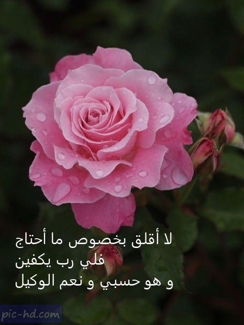 صور جميلة للفيس بوك بوستات فيس بوك حلوه جدا きれいな花 バラの花 美しい花