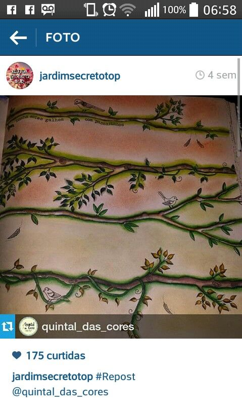 #jardimsecreto #secretgarden #florestaencantada #johannabasford