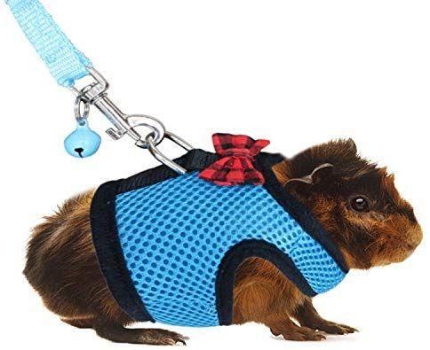 Pin On I Wish Hamster Stuff