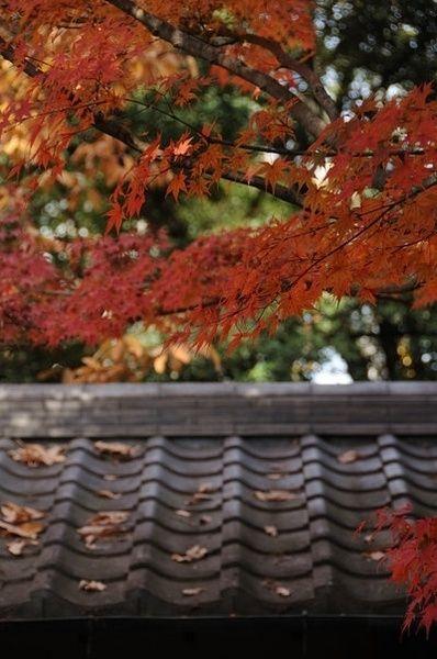 Outono, via sokiki.