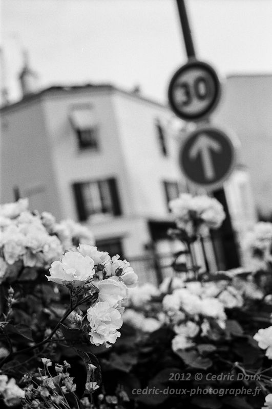 Les fleurs de ce jardin partagé font oublier la jungle urbaine
