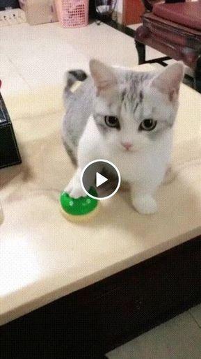 O gatinho mais esperto já encontrado na net