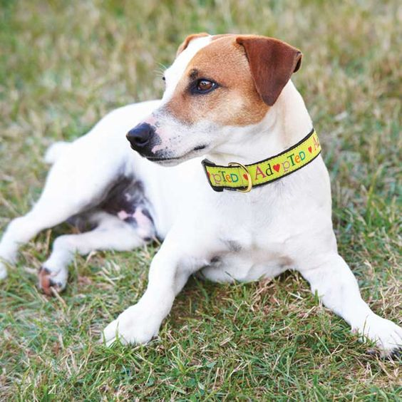 Cute dog collars at www.lalapatoot.com
