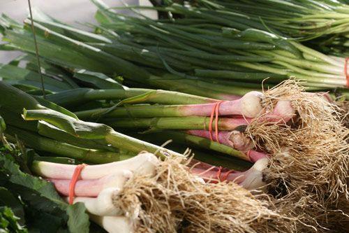 Clams with green garlic